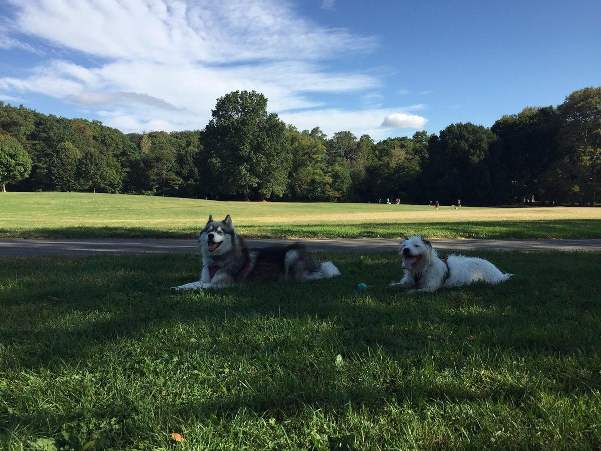 City Canines: NYC's Best Resources for Dogs and Their Humans