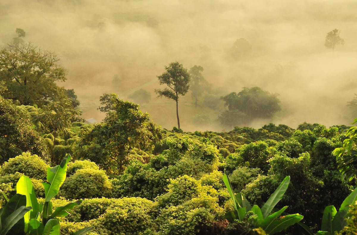 Protection of primary forests is priority, but reforestation is also crucial