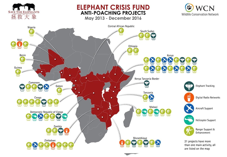Elephant Crisis Fund The Leonardo Dicaprio Foundation