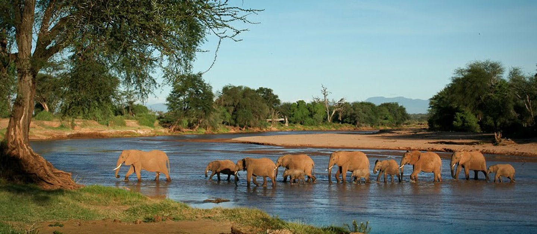 Image result for migratory elephants
