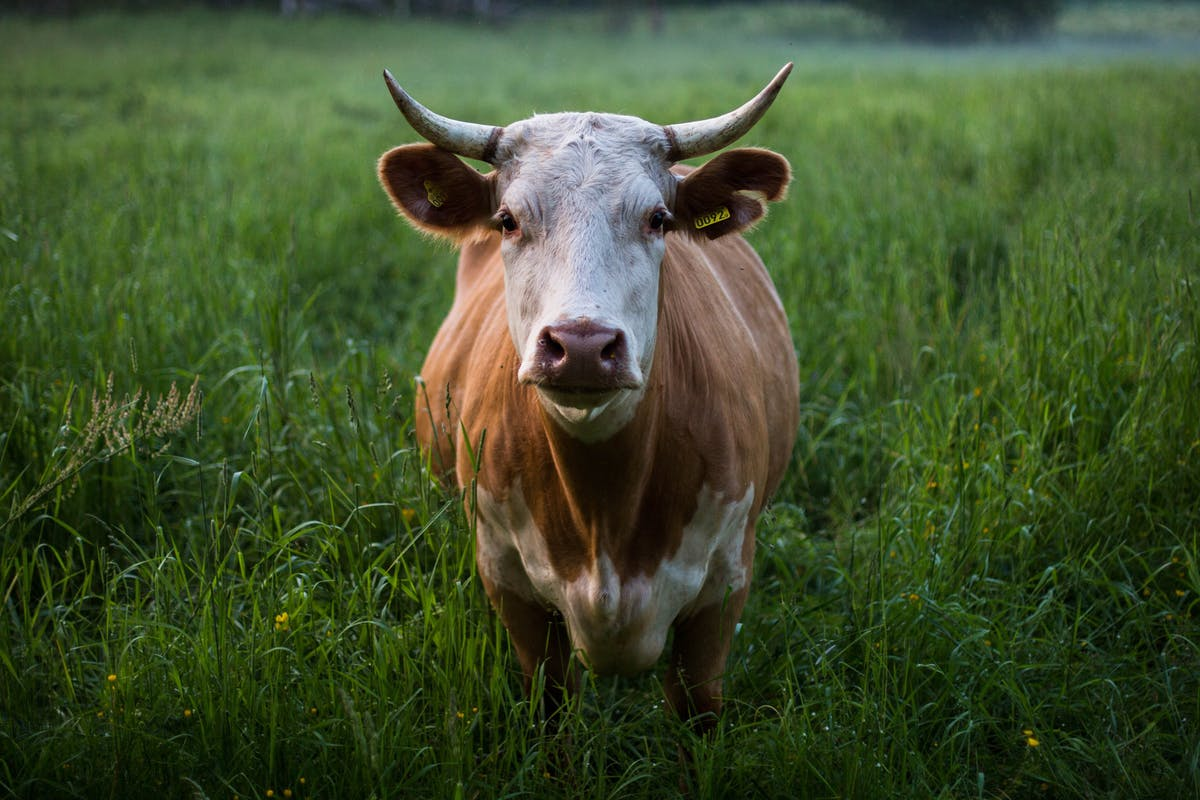 Can responsible grazing make beef climate-neutral? | The