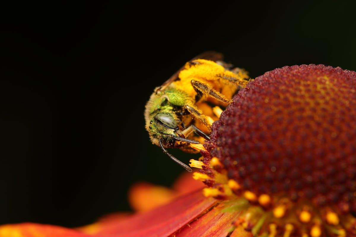 Six ways to help pollinator populations thrive