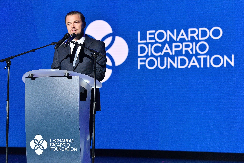 Image result for leo dicaprio foundation