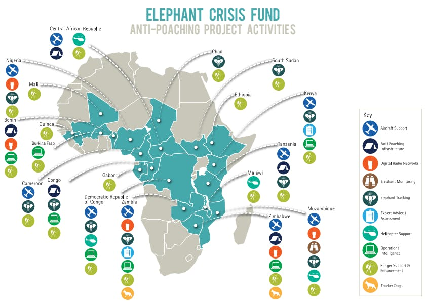 Projects   Elephant Crisis Fund