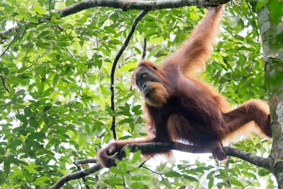 Show the world you #lovetheleuser
