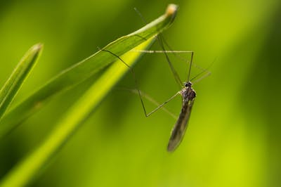 Climate Change behind insect-borne illness rise