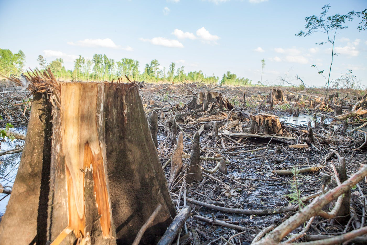 The elephant in the climate room: Industrial logging in the U.S.
