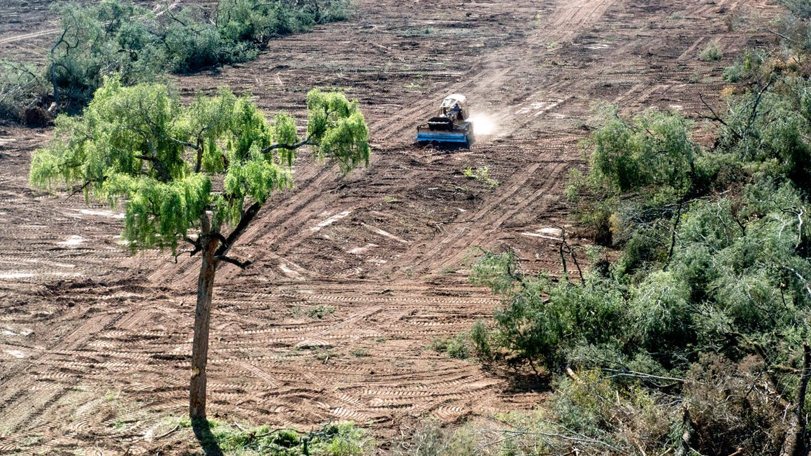 Sign the Petitition to Save Argentina's Forests
