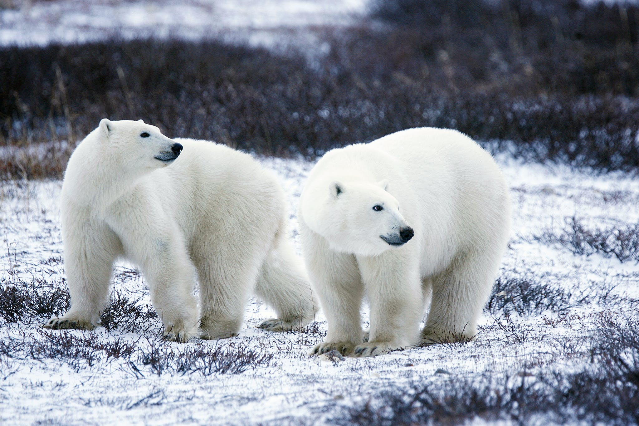 Save the Arctic National Wildlife Refuge!