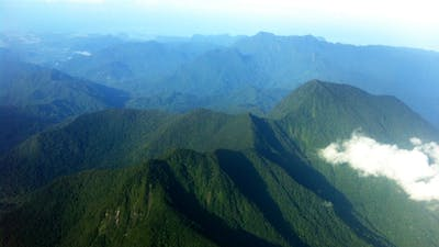 Stop the Destruction of the Leuser Ecosystem