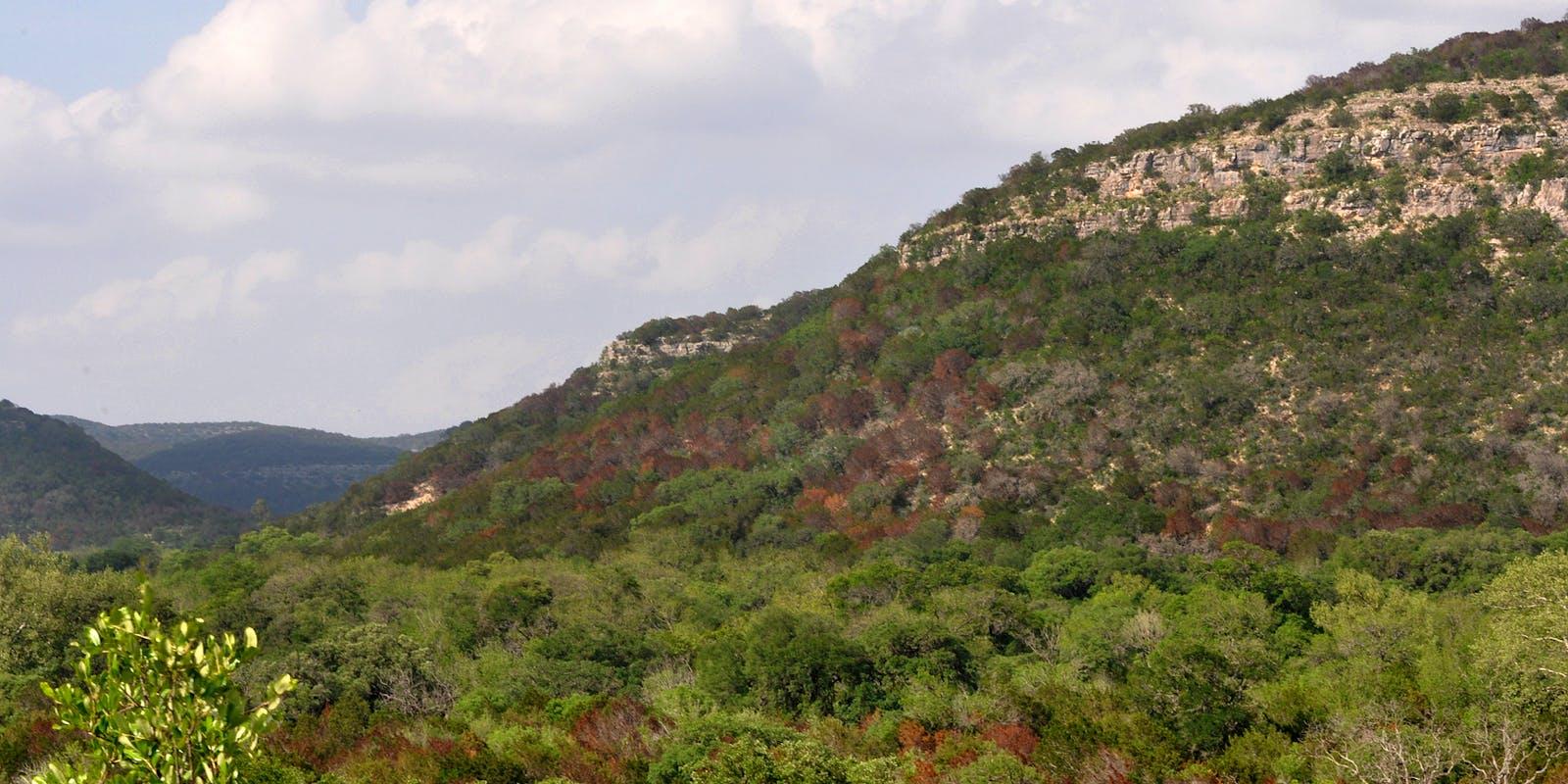 Edwards Plateau Savanna