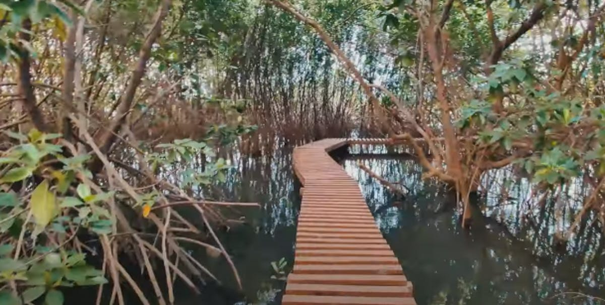 Locals of Karnataka, India spearhead efforts to save and restore mangroves