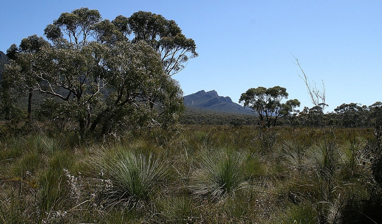 Southeast Australia Temperate Forests