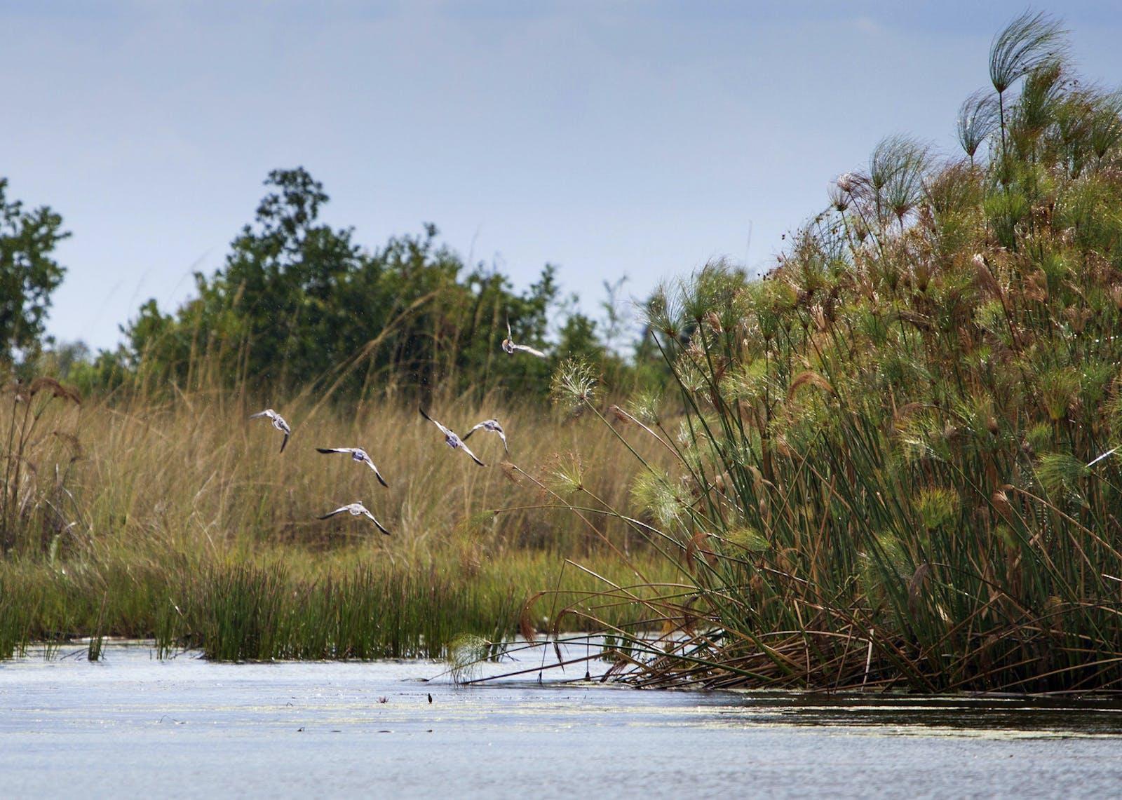 Zambezian Flooded Grasslands