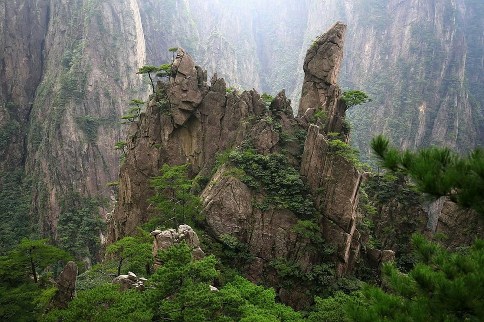Changjiang Plain Evergreen Forests
