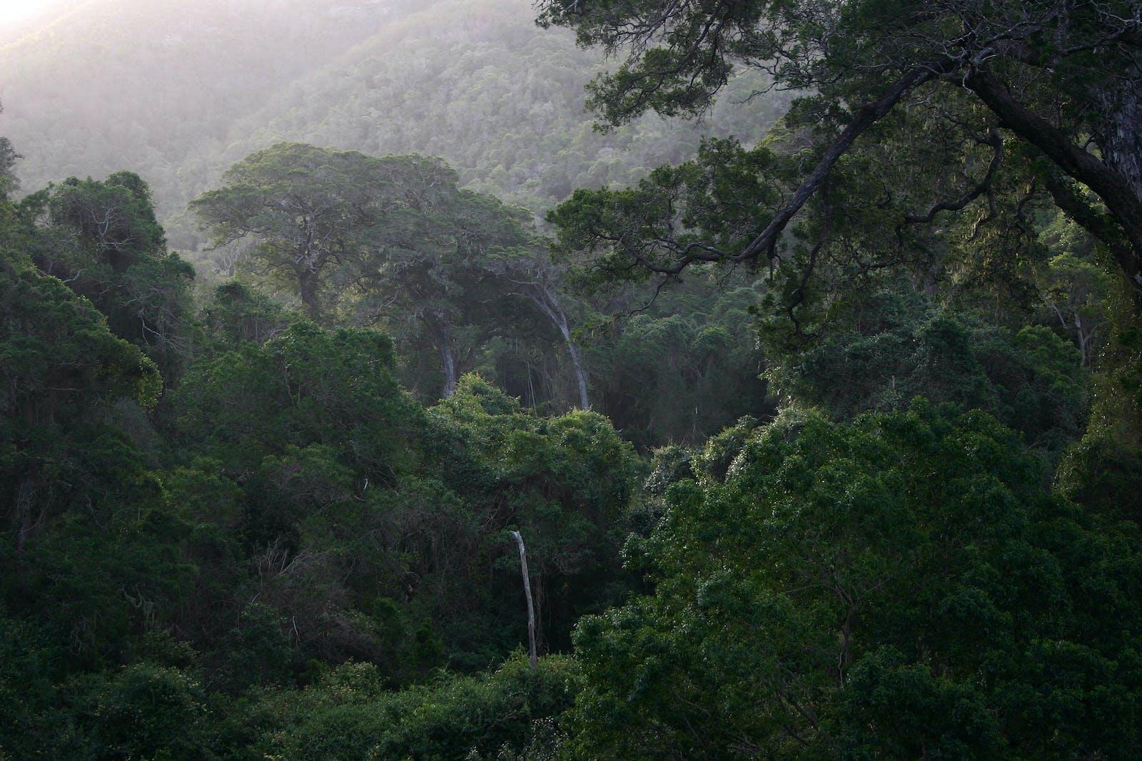 Knysna-Amatole Montane Forests