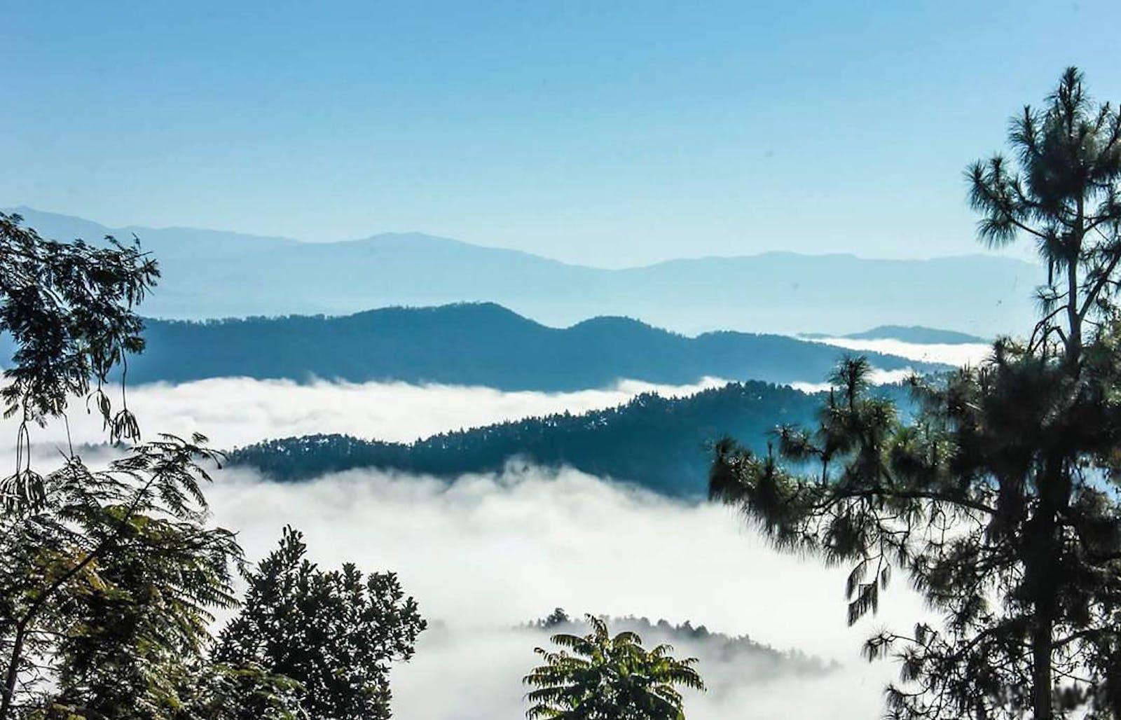 Northeast India-Myanmar Pine Forests