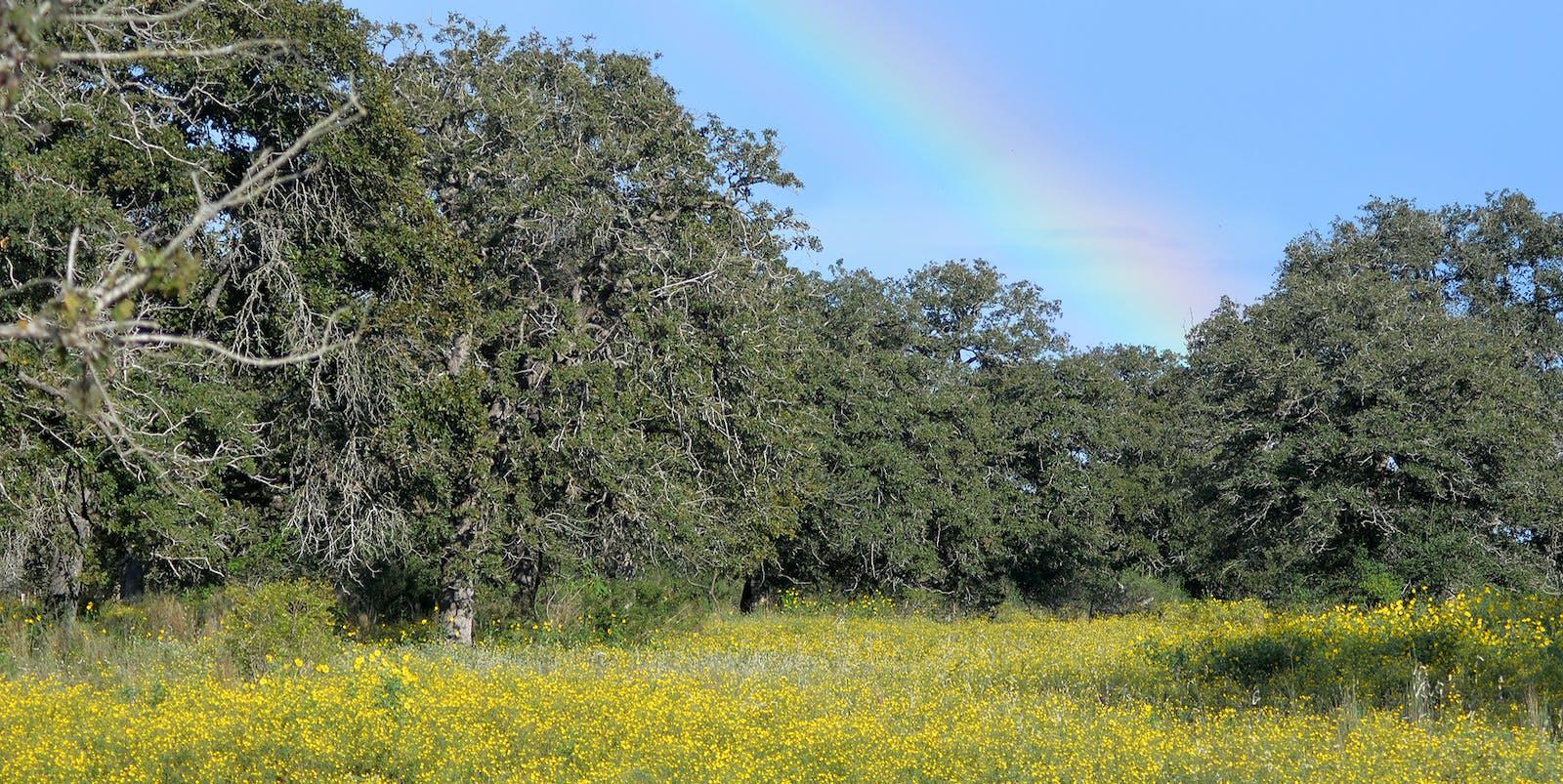 East Central Texas Savanna-Woodland