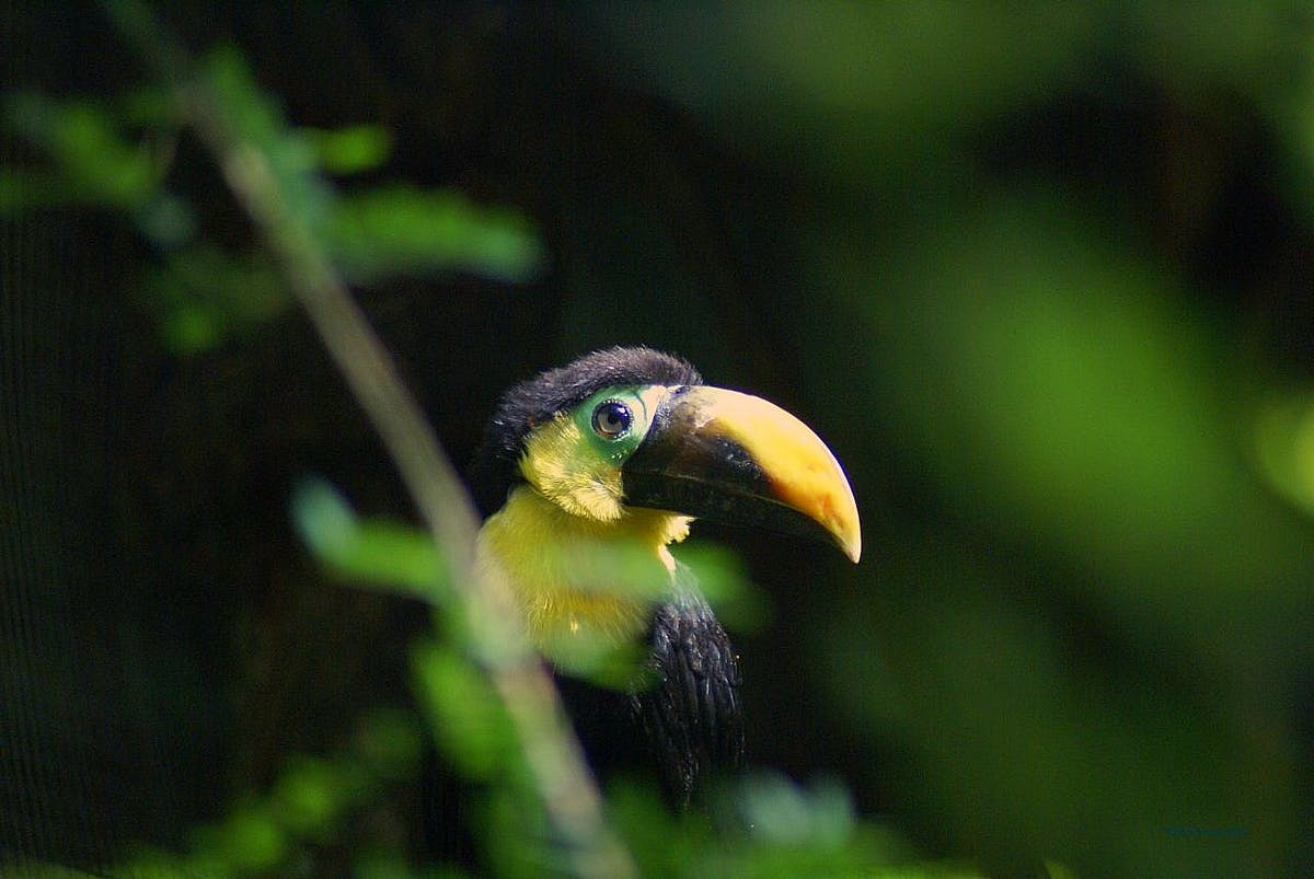 Protecting cultural and biological diversity is central to solving climate change