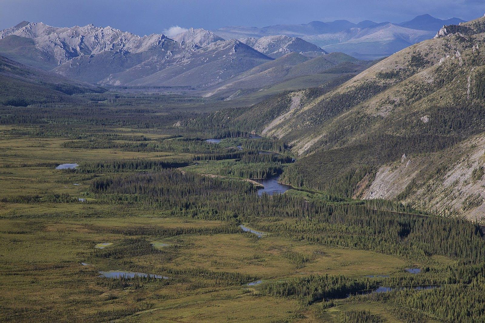Interior Alaska-Yukon Alpine Tundra
