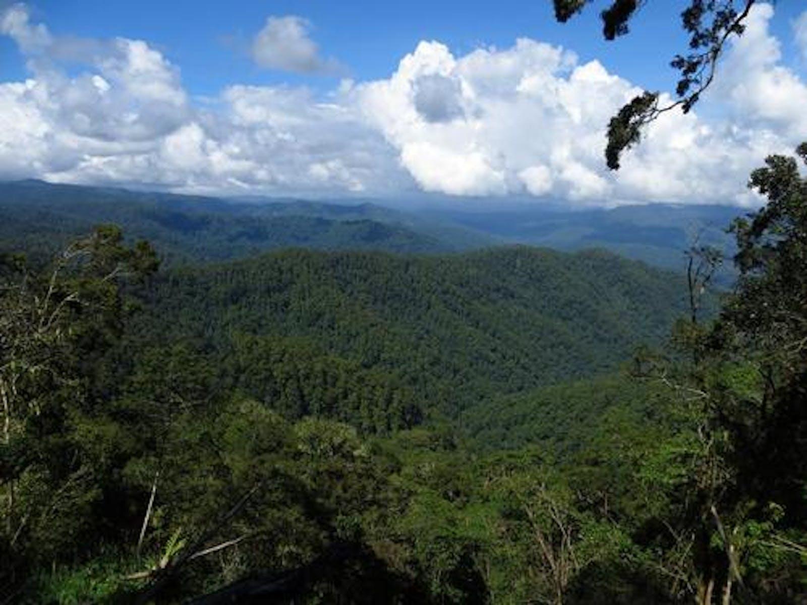 Buru Rainforests