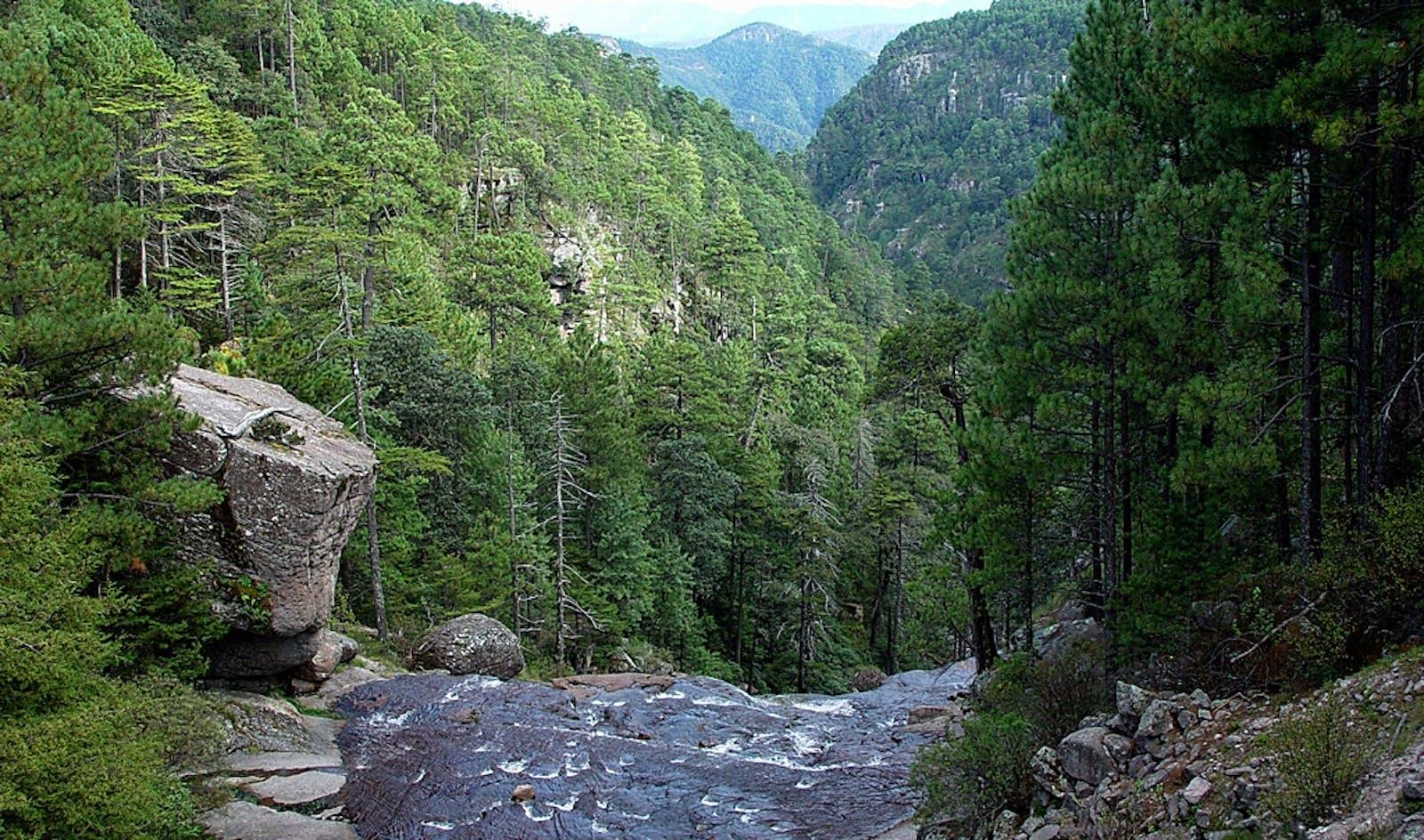 Sierra Madre Occidental Pine-Oak Forests