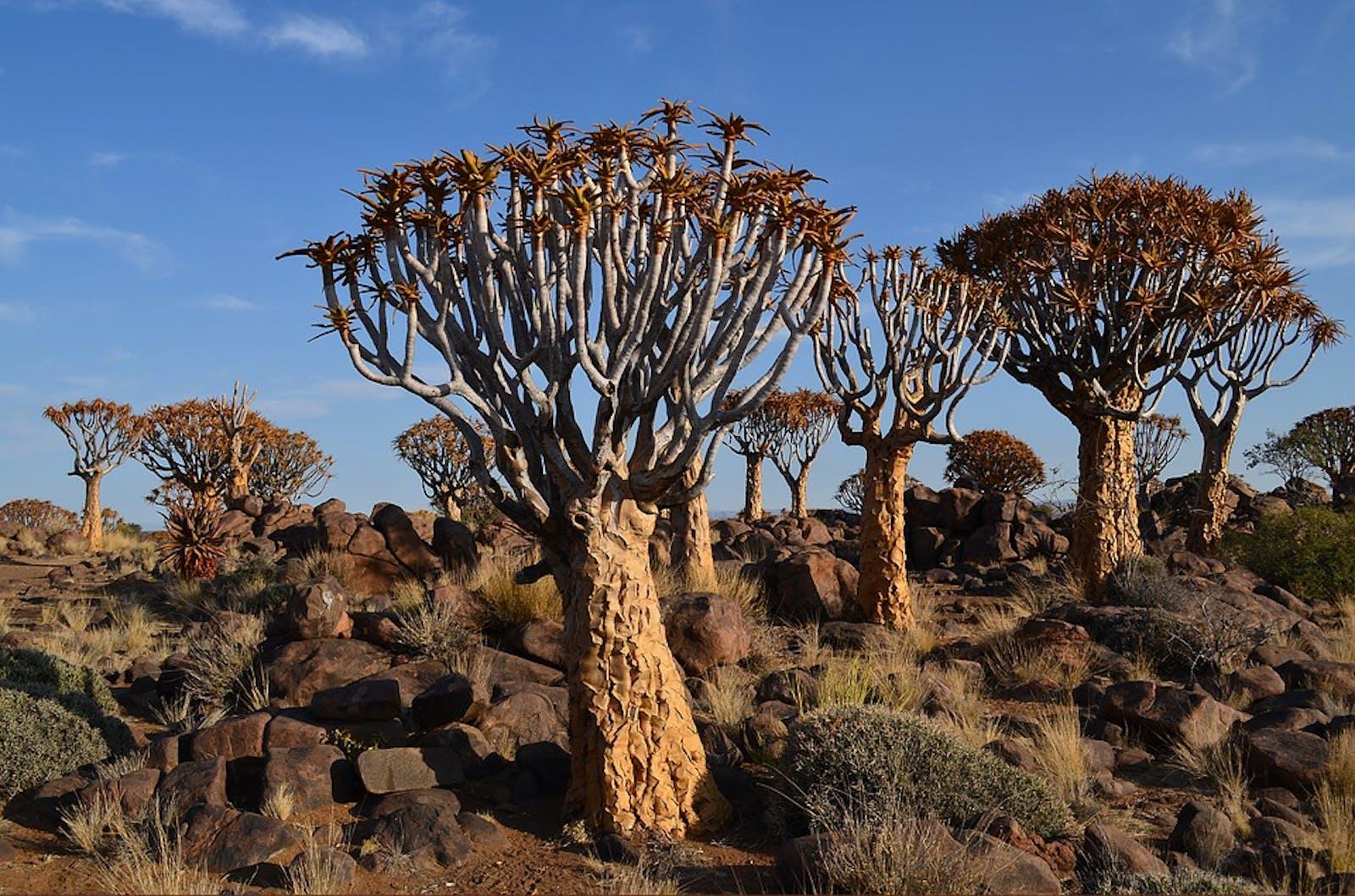 Namibian Savanna Woodlands