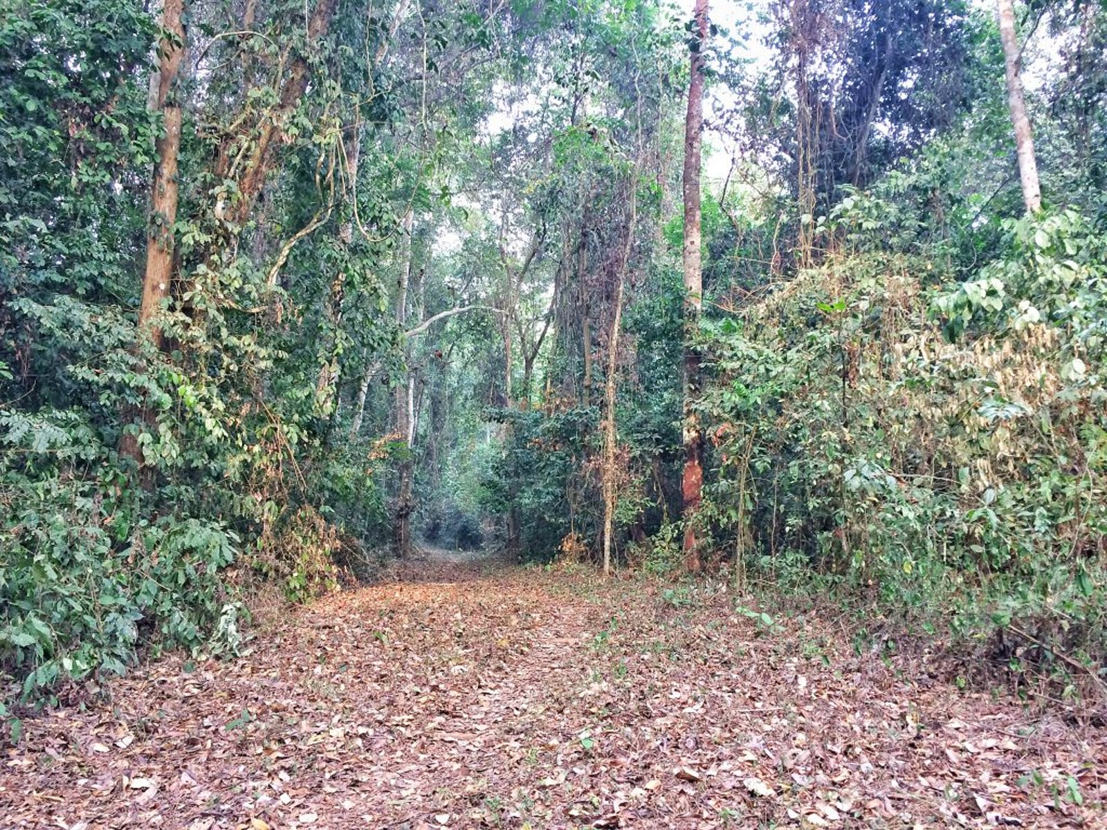 Nigerian Lowland Forests
