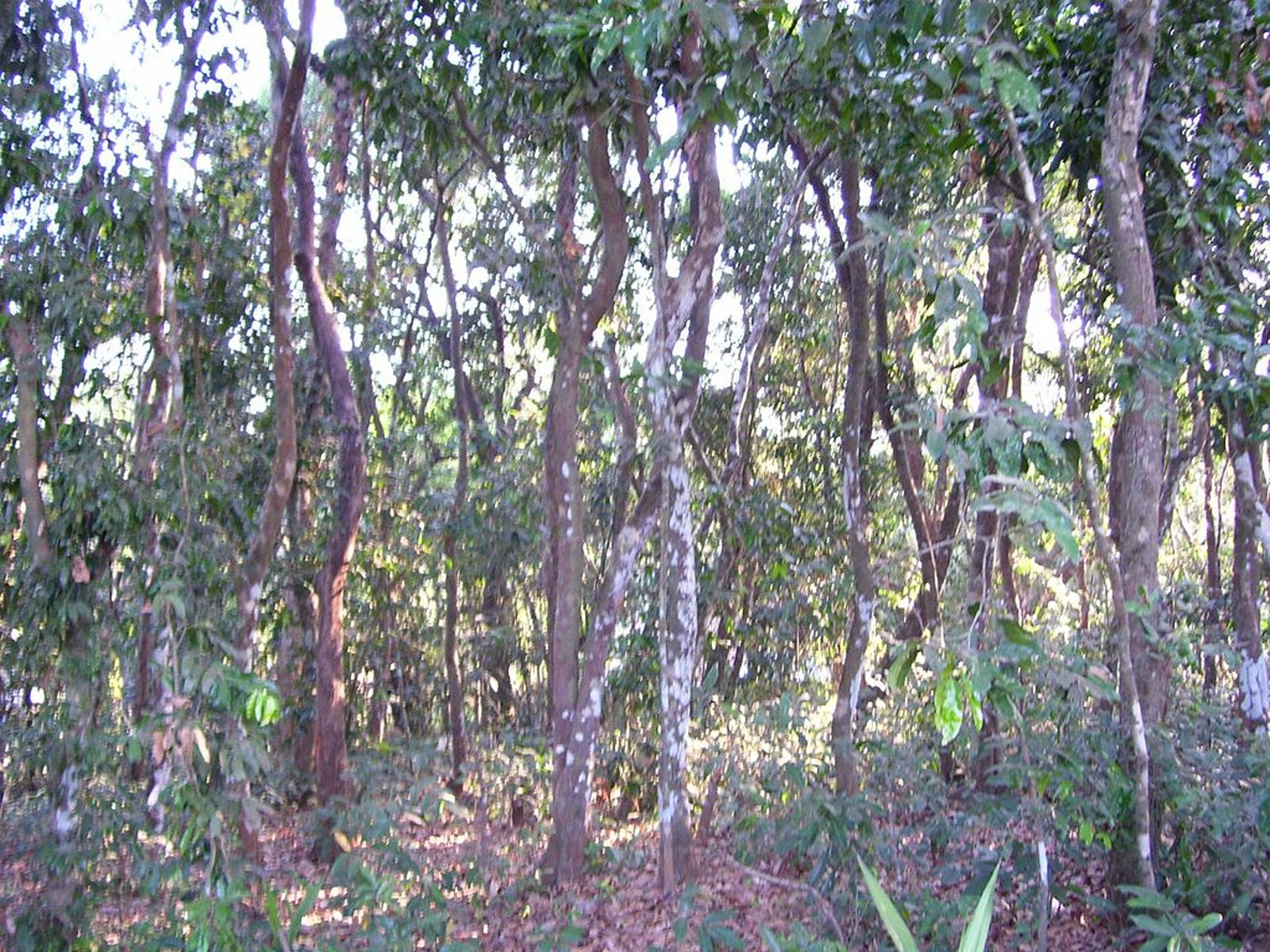 East Deccan Dry-Evergreen Forests