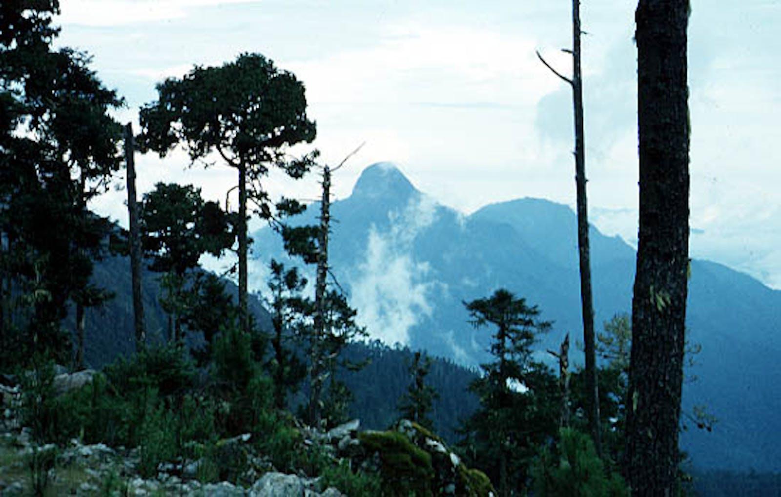 Sierra Madre Del Sur Pine-Oak Forests