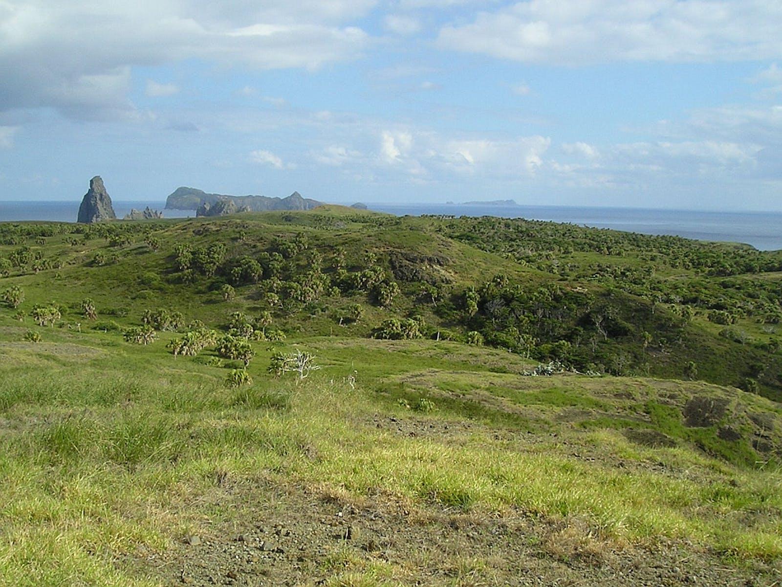 Ogasawara Subtropical Moist Forests