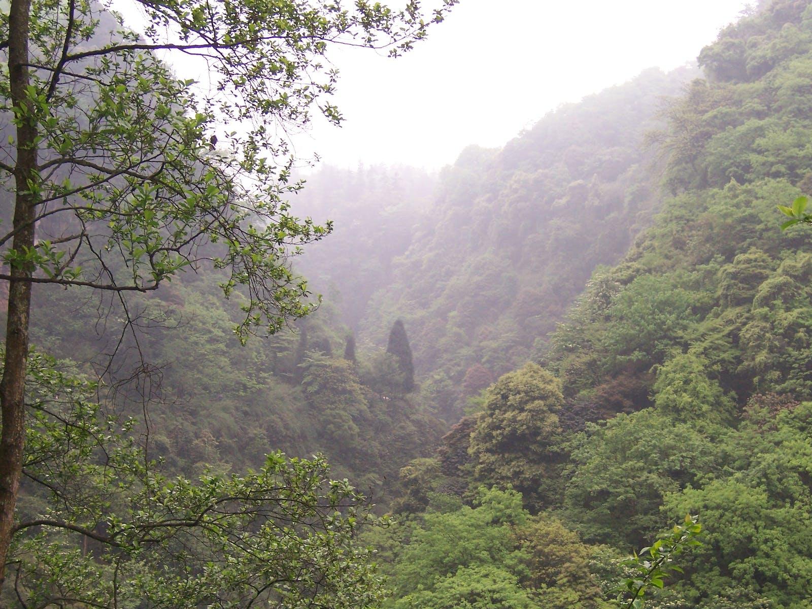 Sichuan Basin Evergreen Broadleaf Forests