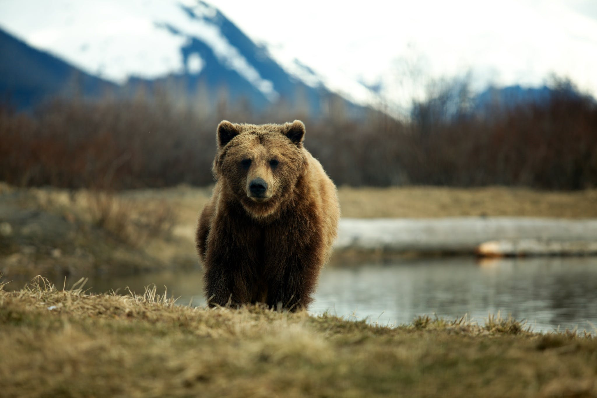 Bear in landscape. Creative Commons, Shane Huang, 2010.
