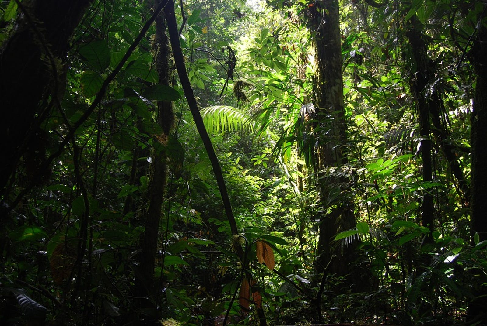 Napo Moist Forests