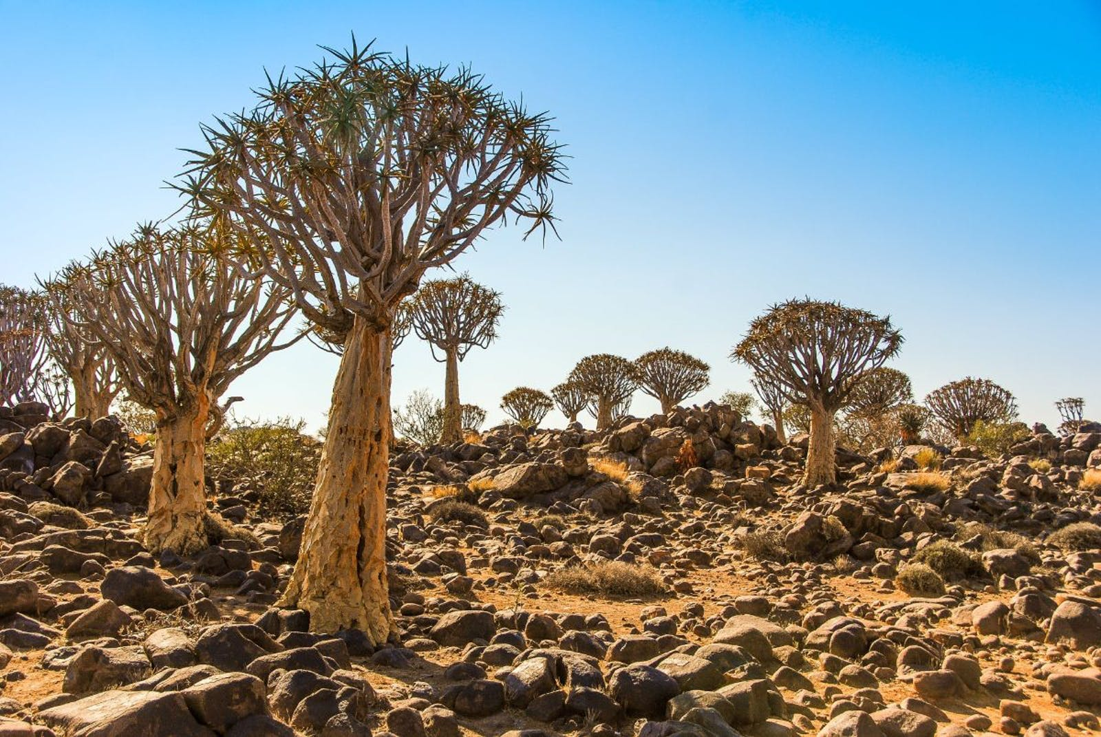 Namaqualand-Richtersveld Steppe