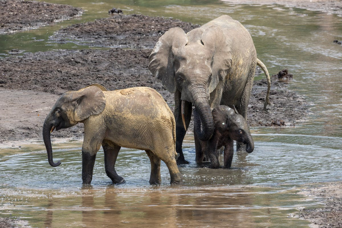 Expanding Protection of Elephants in the Central Afrotropics Region