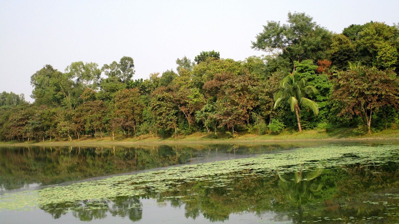 Lower Gangetic Plains Moist Deciduous Forests