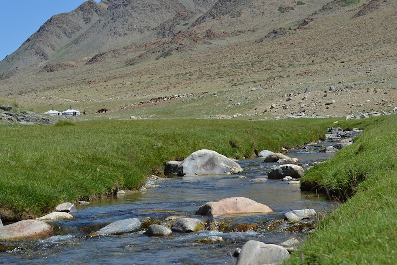 Altai Alpine Meadow and Tundra