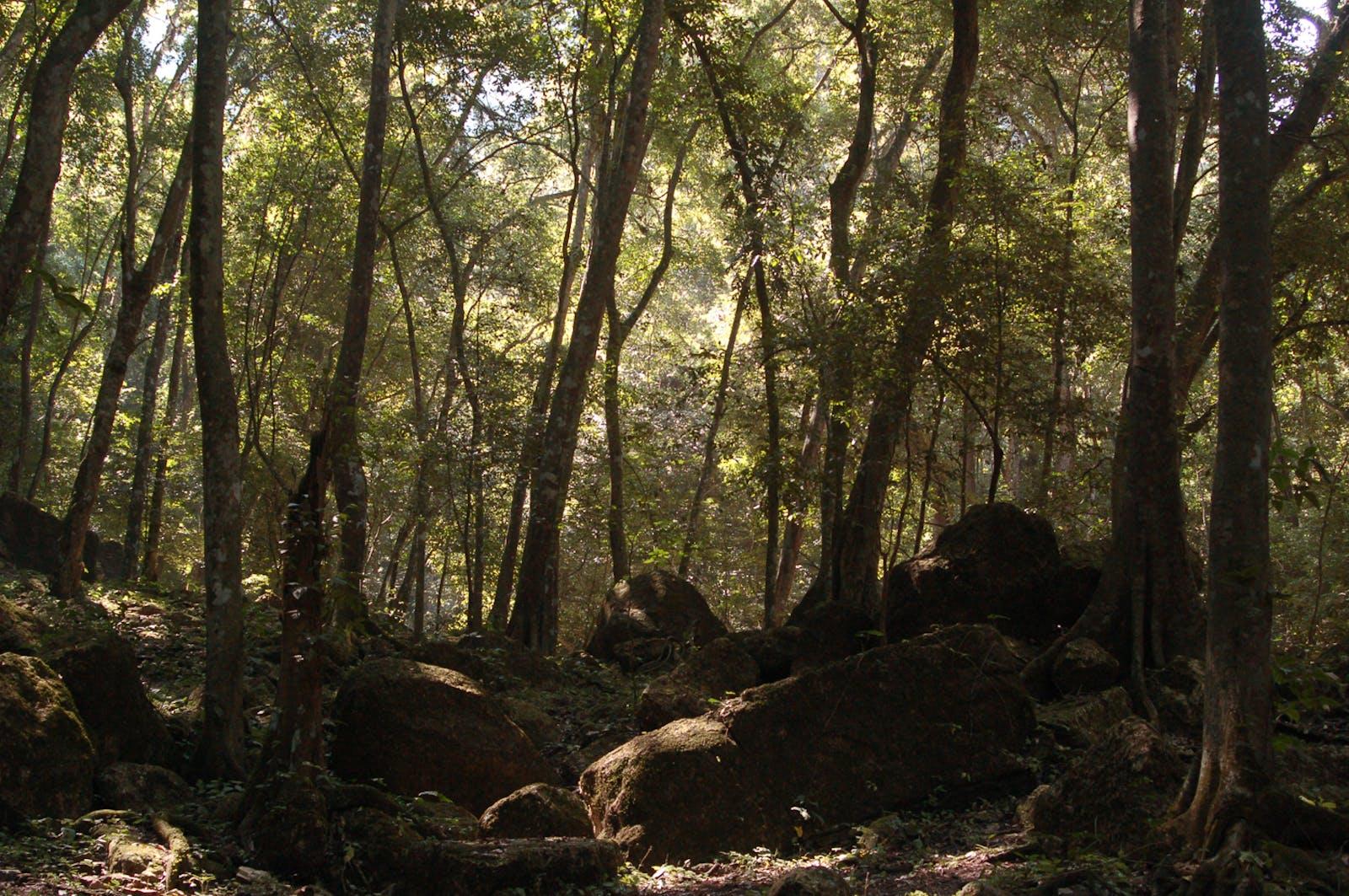 Veracruz Moist Forests