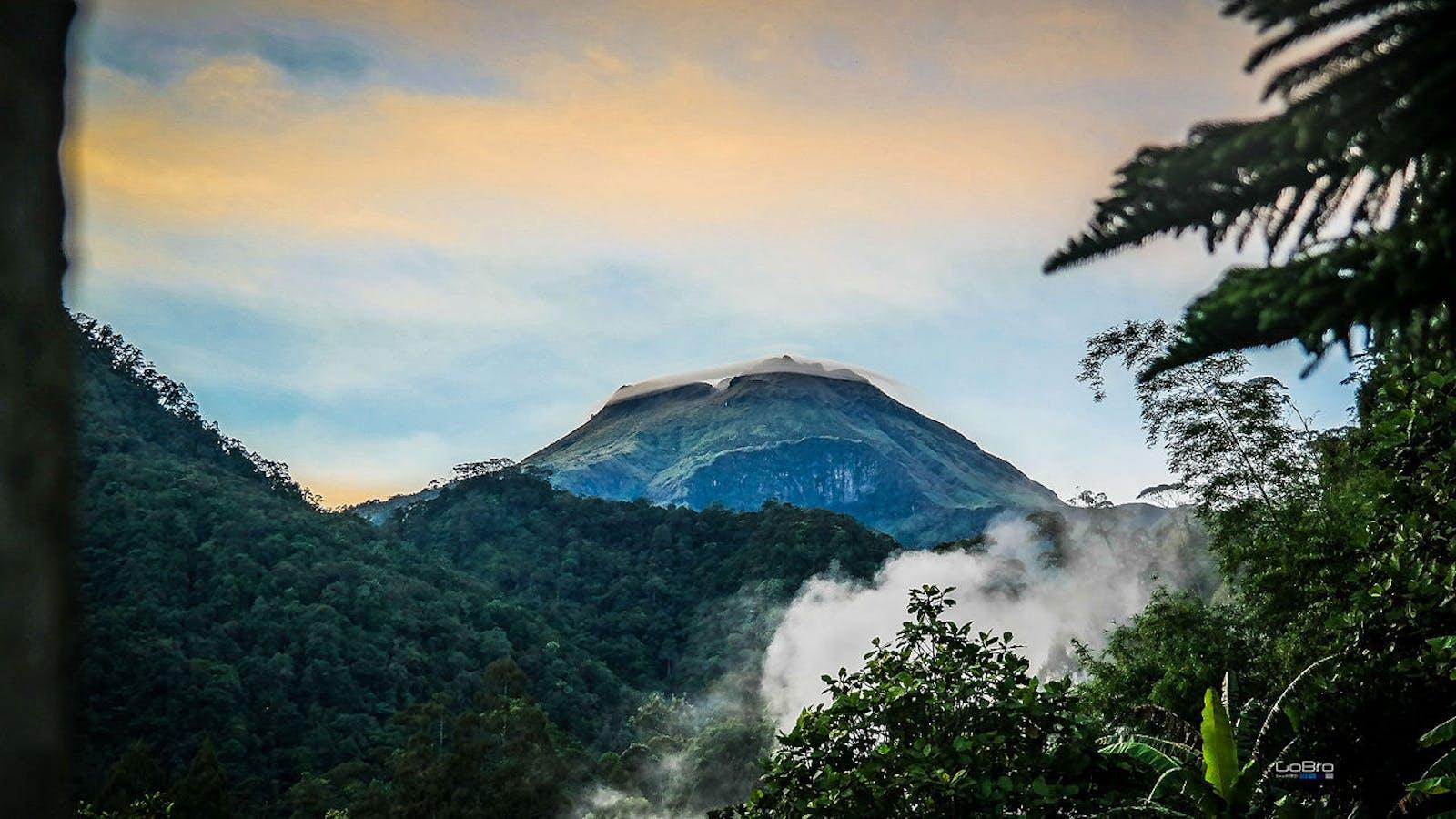 Mindanao Montane Rainforests