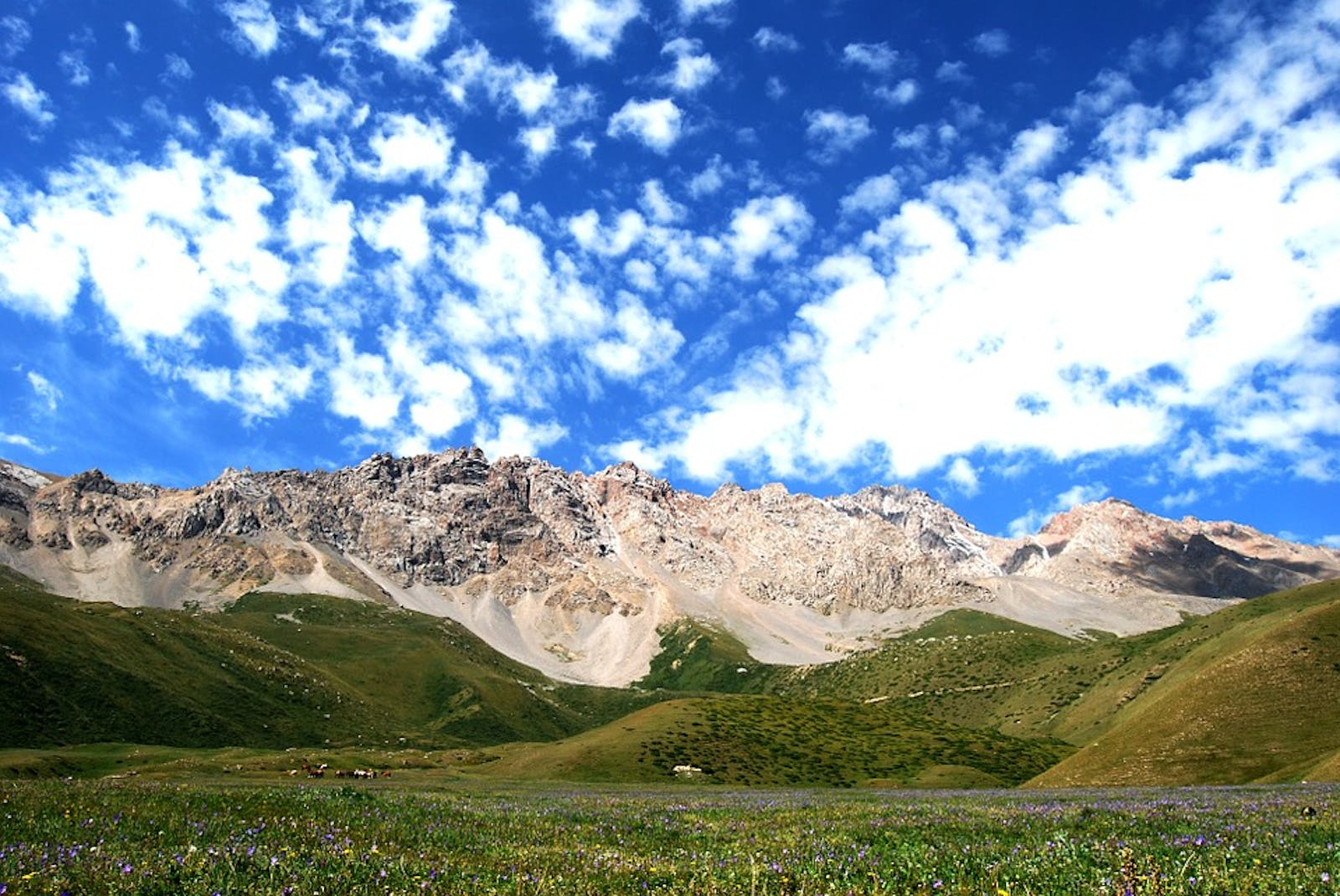 Tian Shan Foothill Arid Steppe