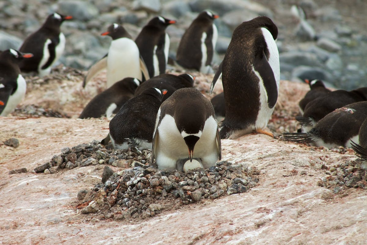 Top five most dedicated dads of the animal kingdom