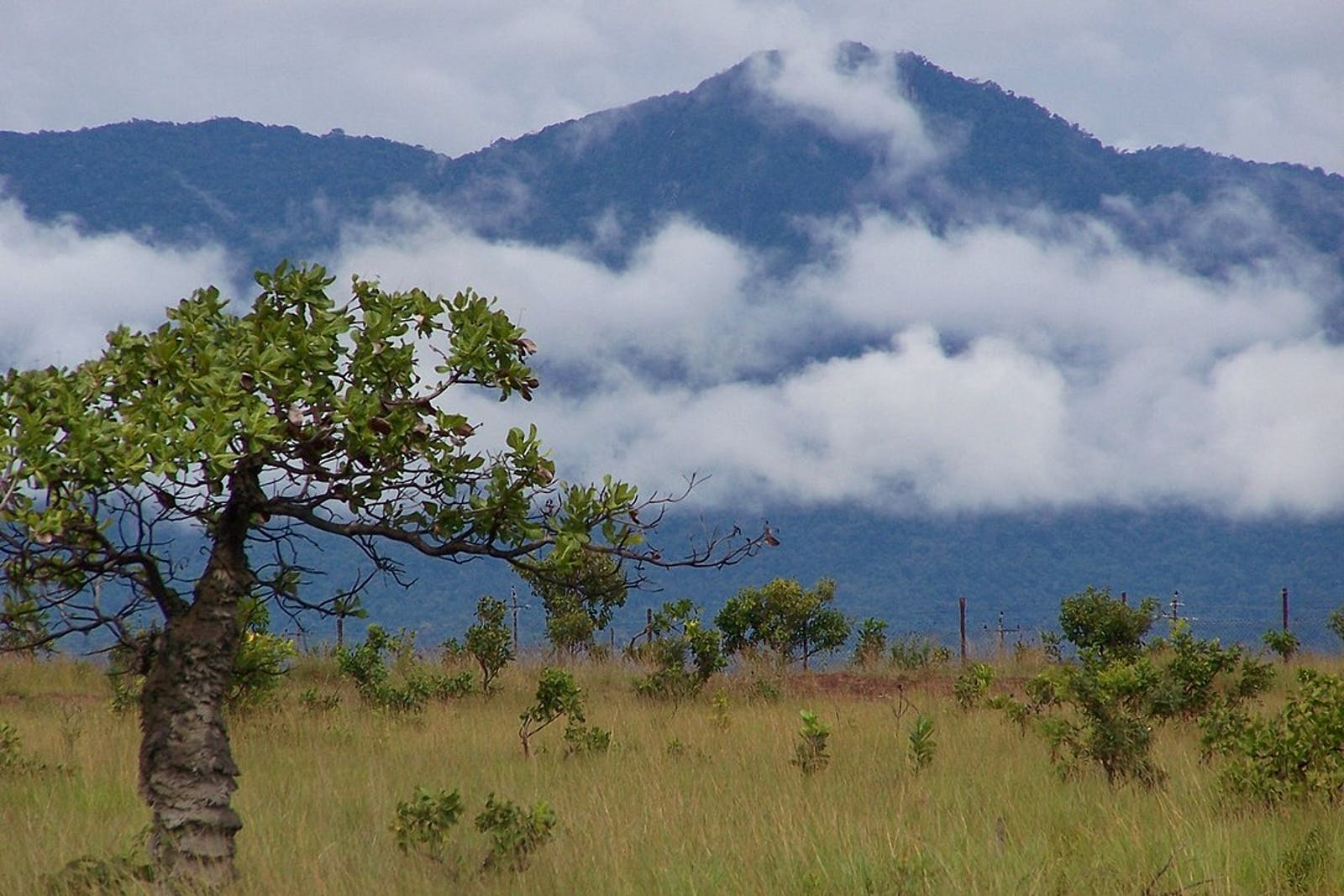 Guianan Highlands Moist Forests