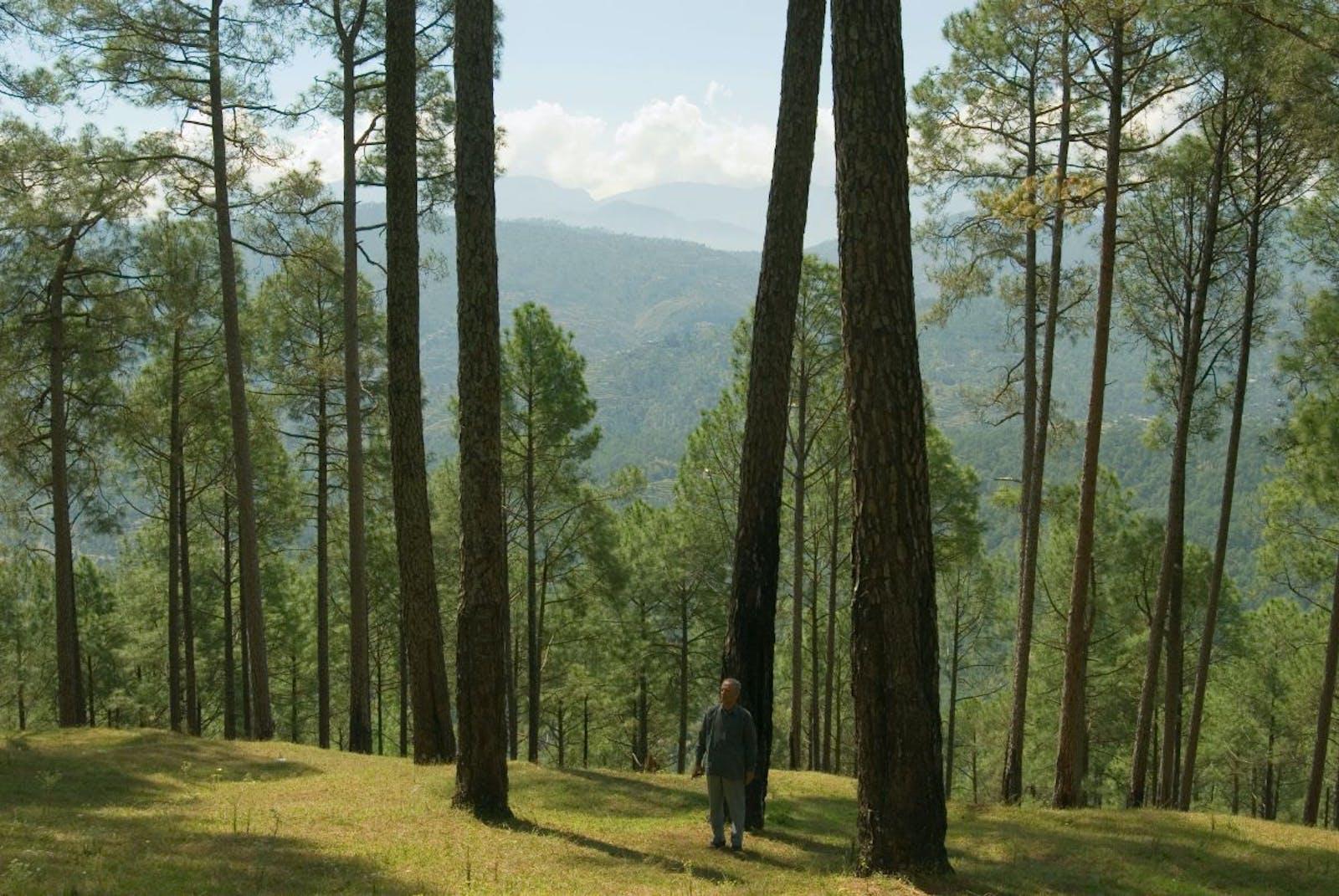 Himalayan Subtropical Pine Forests