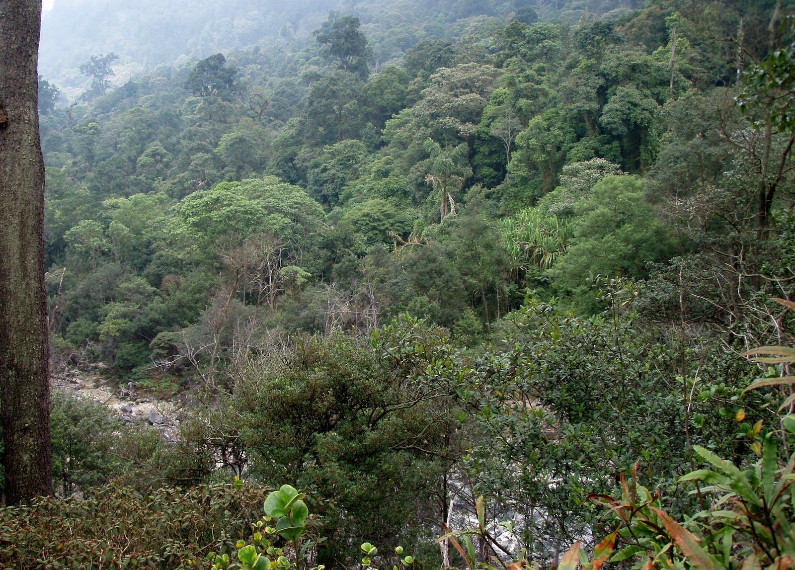 Western Java Montane Rainforests