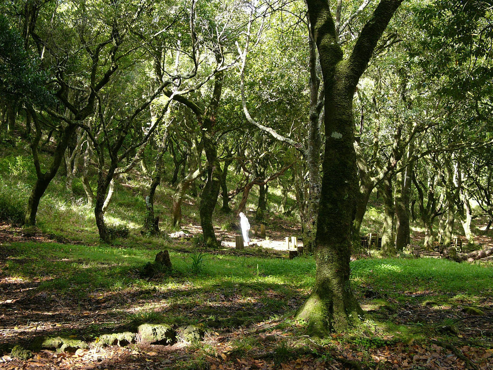 Madeira Evergreen Forests