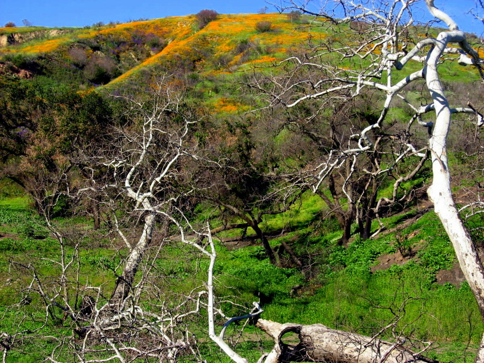 California Coastal Sage and Chaparral
