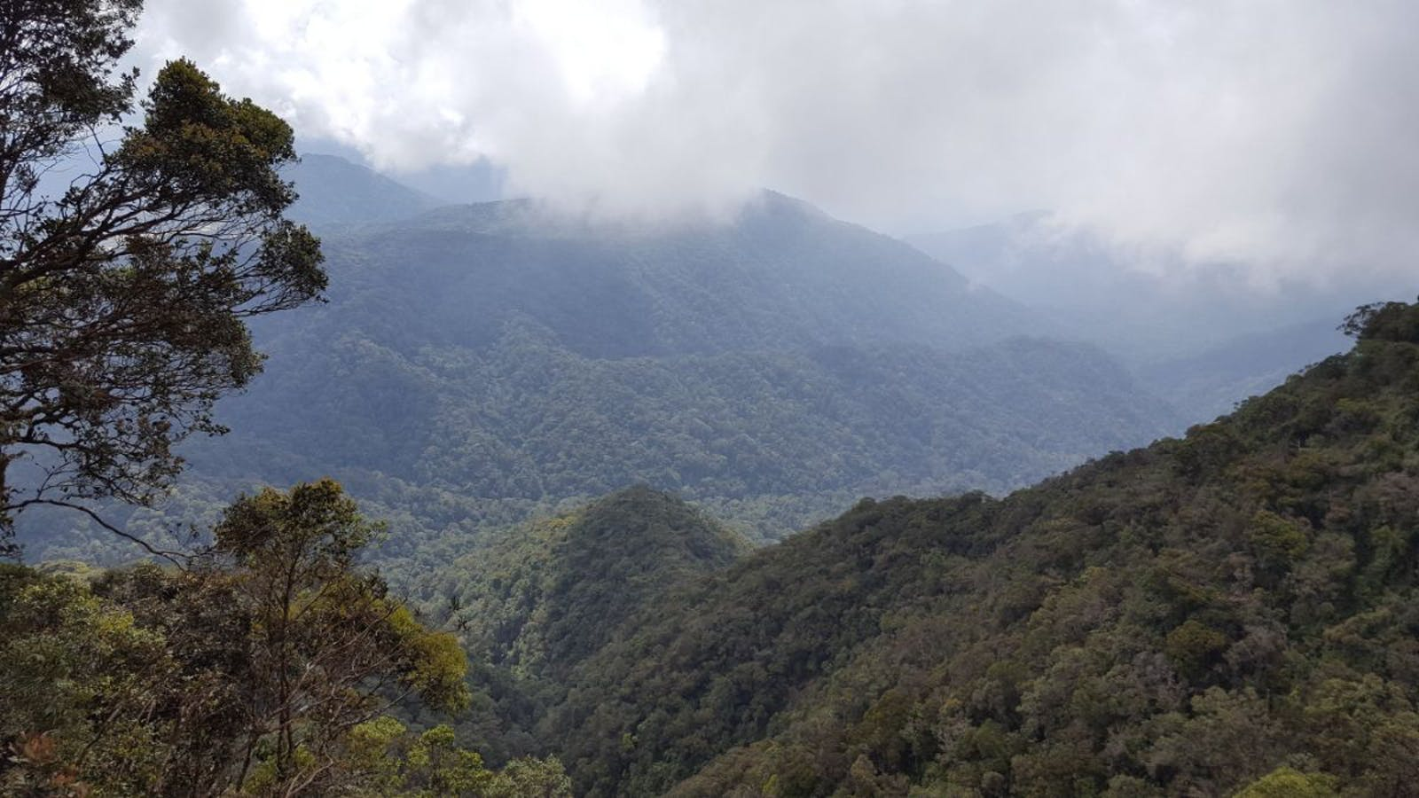 Cameroon Highlands Forests