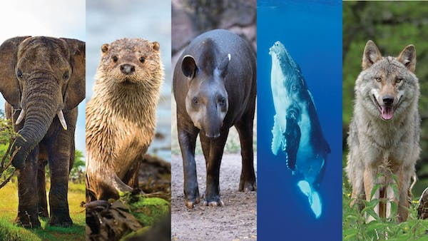 Five animals and how they fight climate change