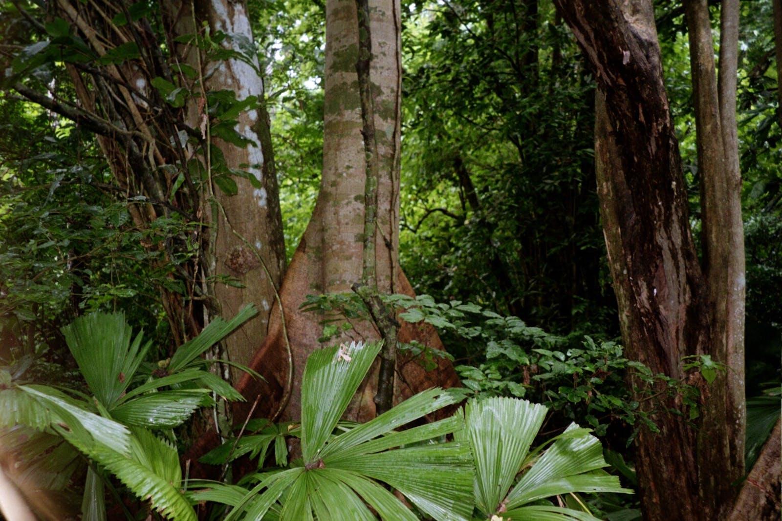 Vanuatu Rainforests